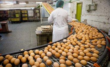 fødevareproduktion
